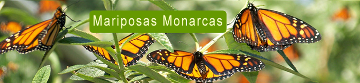 mariposas  Our Services mariposas